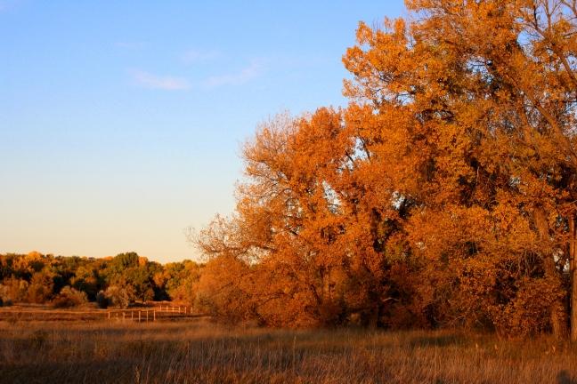 beautiful-autumn-day.jpg